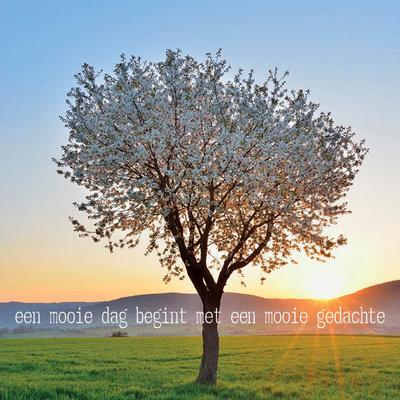 ZintenZ - Dubbele Kaart: Een Mooie Dag Begint Met Een Mooie Gedachte