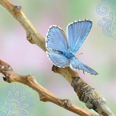 ZintenZ - Dubbele Kaart: Blauwe Vlinder