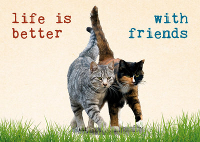 ZintenZ - Kaart: Life Is Better With Friends