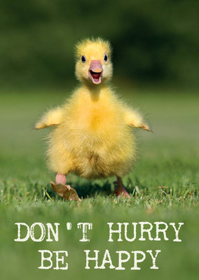 ZintenZ - Kaart: Don't Hurry Be Happy