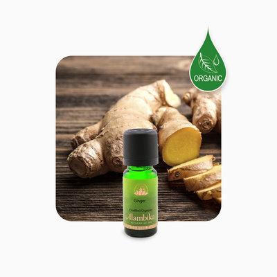 Alambika - Etherische olie: Ginger / Gember Biologisch Gecertificeerd 10 ml