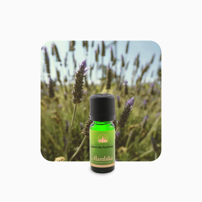 Alambika - Etherische olie: Lavender Kashmir 10 ml