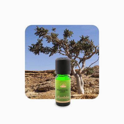 Alambika - Etherische olie: Frankincense Carterii 10 ml
