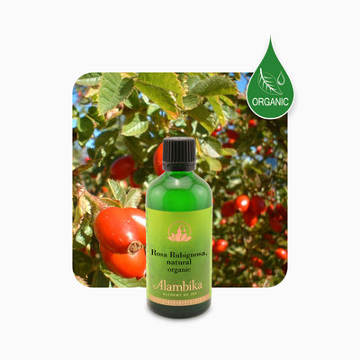 Alambika - Basis olie: Egelantier / Rosa Rubiginosa Olie Biologisch Gecertificeerd 50 ml (tht: 03-2021)