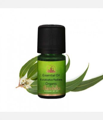 Alambika - Etherische olie: Eucalyptus Radiata Biologisch Gecertificeerd 10 ml (tht| 03-2020)