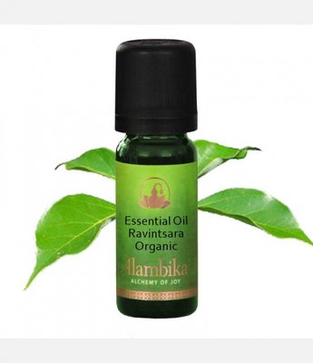 Alambika - Etherische olie: Ravintsara / Ravensara Biologisch Gecertificeerd 10 ml (tht: 07-2020)