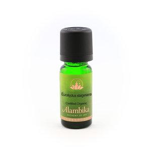 Eucalyptus Staigeriana etherische olie
