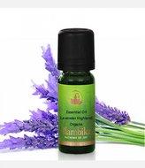 Lavender highland